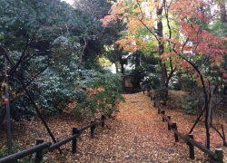 雨の井の頭公園